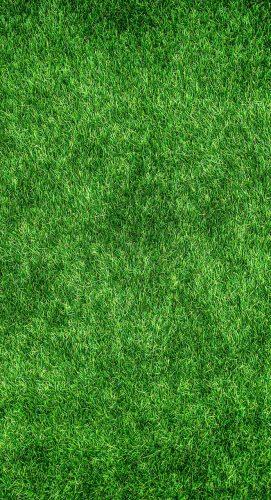 grass-1659054_1280